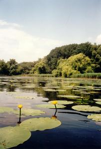© Photo: Rettet-die-Lobau, Hertenberger