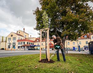 © Brau Union Austria / Un des arbres plantés